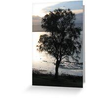 Swamp Oak Silhouette Greeting Card