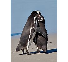 Pingo Hugs Photographic Print