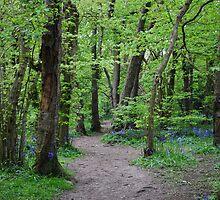 Kingsdown Woods by BeckyMP