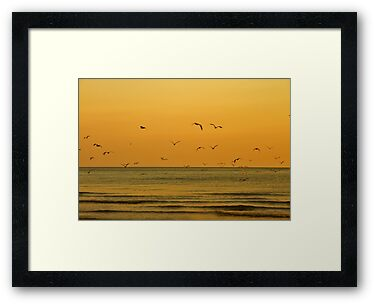 Seagulls At Sunset - Brighton - England by Bryan Freeman