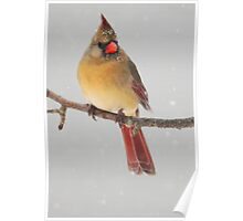 Northern Cardinal in the snow Poster