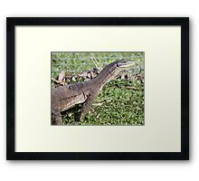 Dragon with forked tongue. Framed Print