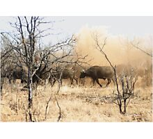 """BUFFALO DUST"" - Kruger Nat. Park - SA Photographic Print"