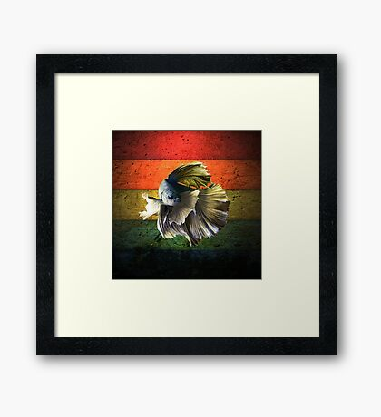 Betta Fish Framed Print