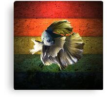 Betta Fish Canvas Print