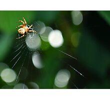 Caught his web. Photographic Print