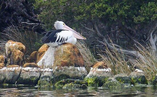 Alone, waiting.......... Wilsons Inlet, Denmark, Western Australia by Karen Stackpole