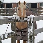 Winter park Horse  by JF Gasser