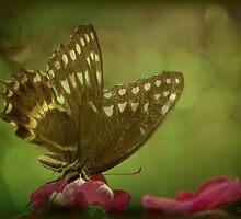 Butterfly Bokeh by DottieDees