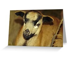 Cameroon sheep Greeting Card
