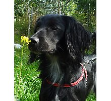 Flower sniffer Photographic Print