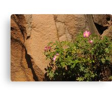 Rocks and Roses Canvas Print