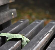 All Alone on a Park Bench by Hilda Rytteke