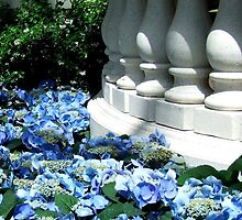 Hydrangeas and balustrade in Las Vegas. by Marjorie Wallace