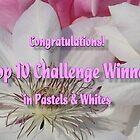PW TT Banner Challenge by plunder