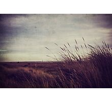 Grass Blown Photographic Print