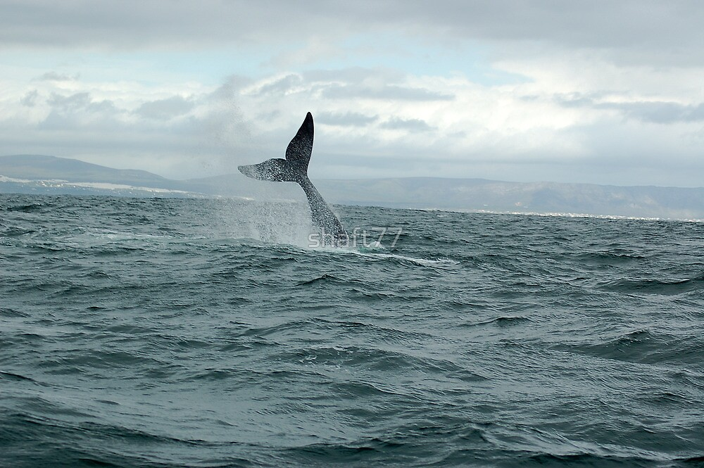 whale Tail- south africa by shaft77