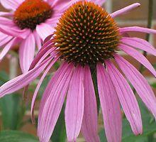Pink Flower - Mars Hill, N.C. by glennc70000