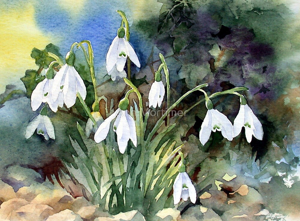 Snowdrops and Ivy by Ann Mortimer