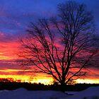 "Valentine's Day Sunrise by Christine ""Xine"" Segalas"