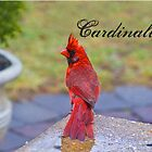 Cardinalis by Trudy Wilkerson