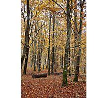 Autumnal Shades Photographic Print