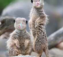 The Meerkats by pinkyjainpan