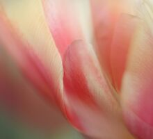Reaching for Spring  - JUSTART © by JUSTART