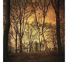 Vintage Forest Photographic Print