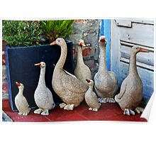 Ducks For Sale Poster