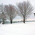 True Snow-Birds by T.J. Martin