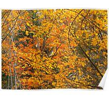 Leaf Tangle Poster