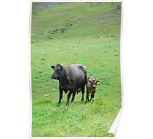 Cow with Calf on Thorpe Hillside Poster