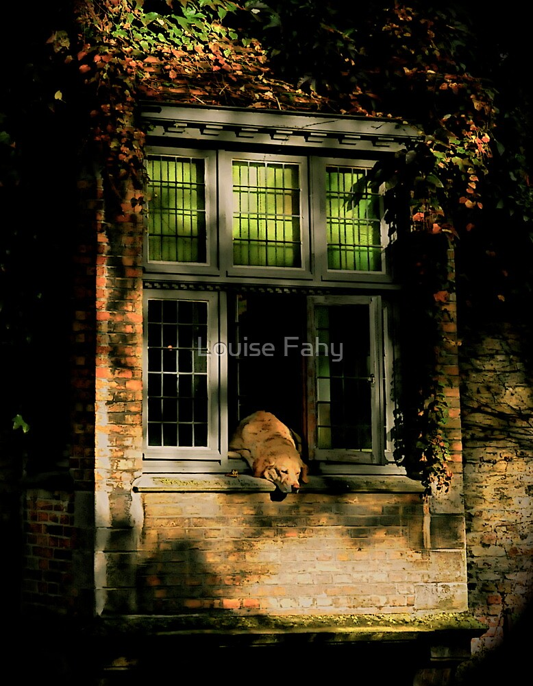 A nap in the sun by Louise Fahy