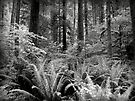 Ferns & Trees  by Lucinda Walter