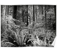 Ferns & Trees  Poster