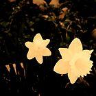 Des fleurs pour l'année by Schutte14