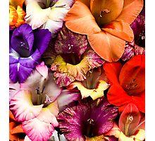 Colorful Gladiolas Photographic Print