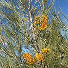 Tall native Grevillea alongside Luritja Rd. Outback N.T. by Rita Blom