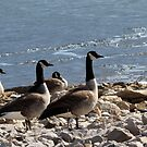 birds of a feather flock together by katpartridge