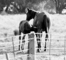 Mare and Foal by Julie Sleeman