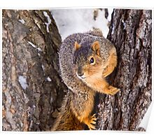 Wary Squirrel Poster