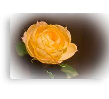 Gold Rose Canvas Print