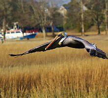 Pelican in Murrells Inlet by Paulette1021
