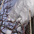 Winter's Grip by kenspics