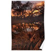 A Log Enjoys A Sunset Poster