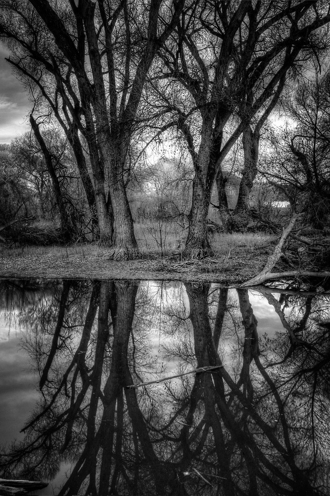 If Trees Could Talk by Bob Larson