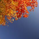 primary colors in nature by Aimelle