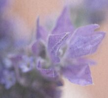 Lavender by BoB Davis