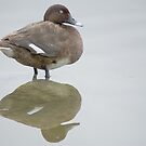 Lonely Duck - Newport Lakes Melbourne Victoria  by MIchelle Thompson